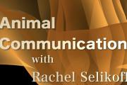 Animal Communication - ZOOM Meeting, September 2021