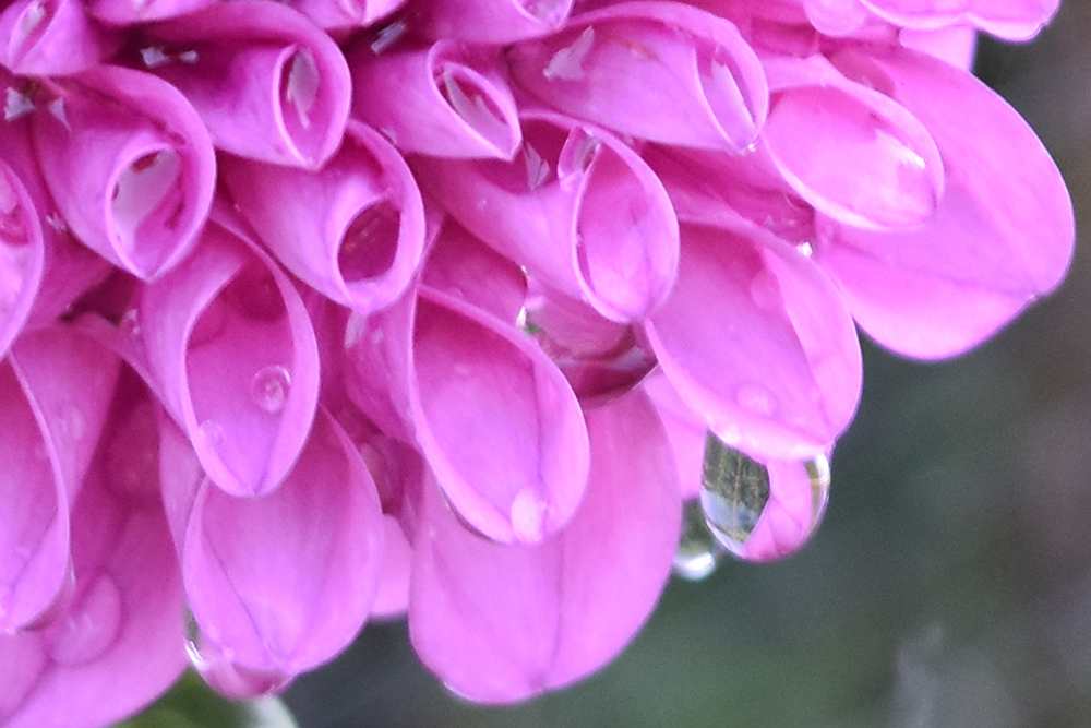 NewTV Summer Photo Contest Stacey Richard Droplets on Flower Petals